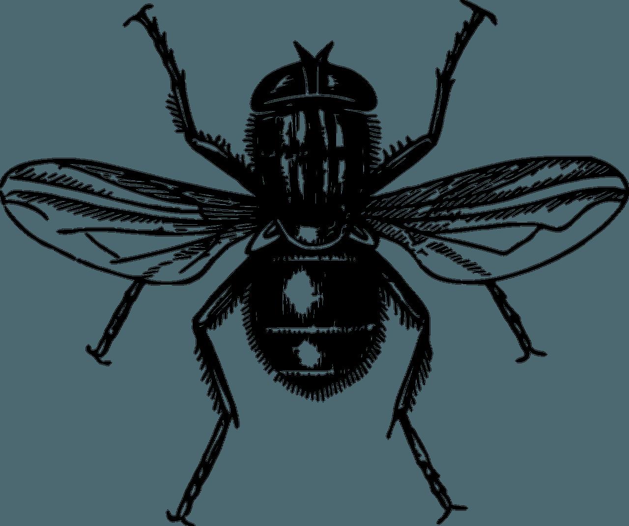Disinfestazione mosche: perché è importante